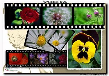 Fiori, insetti & Co.