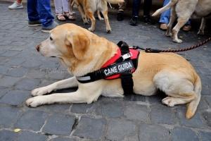 giornata nazionale del cane guida 16/10/2014