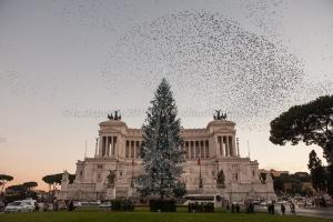 Addobbi e luci accese sugli alberi di Natale, 11/12/2015