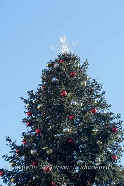 albero Piazza Venezia