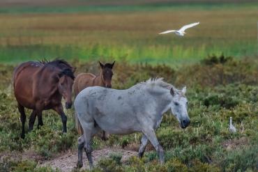 Cavalli del Coto Doñana al pascolo *****